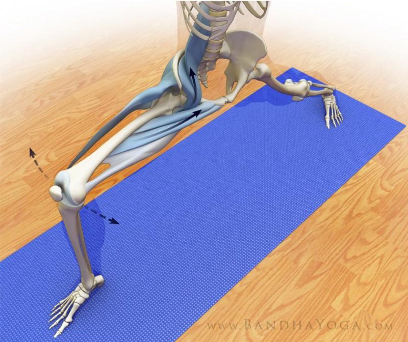 避免瑜伽损伤vs避免瑜伽 Part III:关节活动度、稳定度和本体感觉