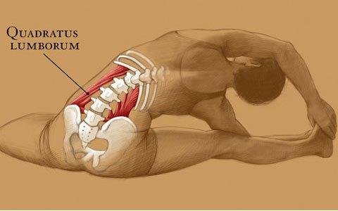 令人心满意足的侧弯解剖学
