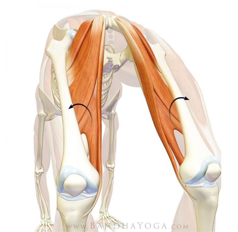 如何在后弯时避免膝盖往外分开?