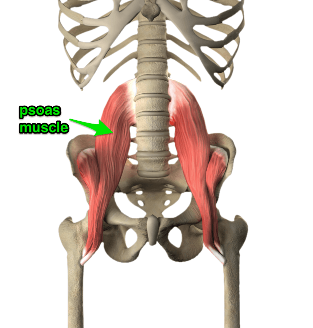 Uddiyana Bandha的解剖学观点